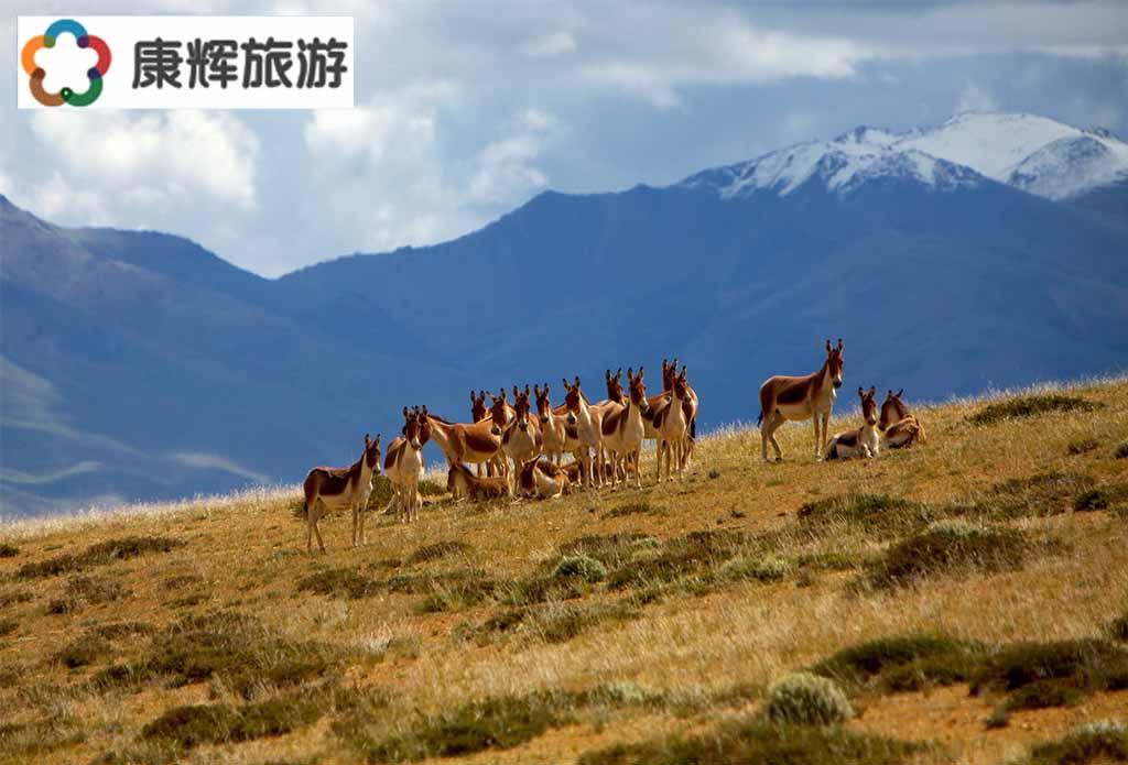 西藏旅游-林芝鲁朗林海